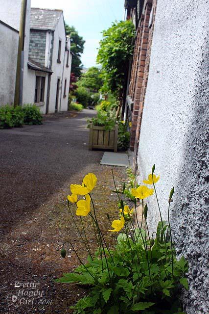 wildflowers_in_alley