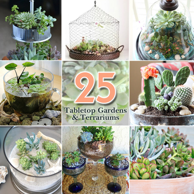 25 Tabletop Garden Terrariums