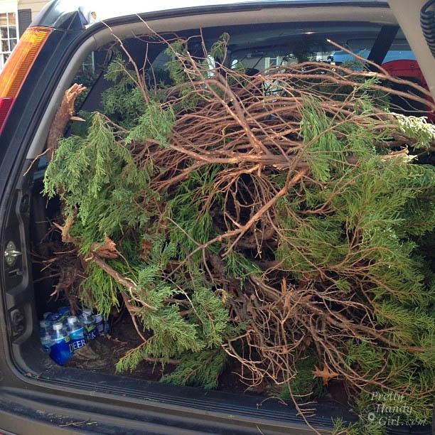 juniper-filled-trunk