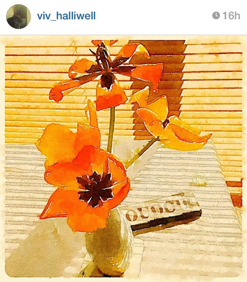 viv_halliwell_orange_blooms