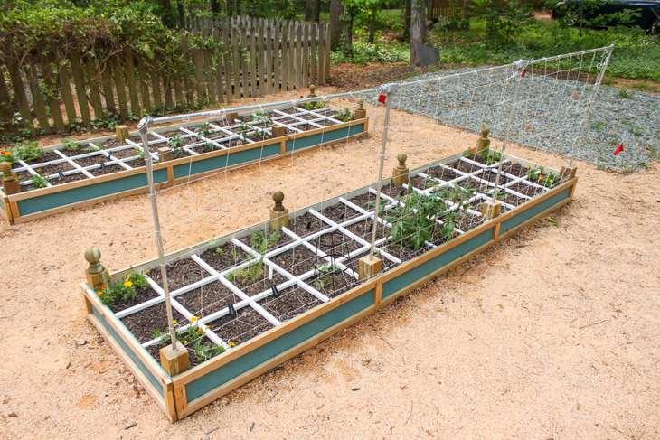 budget-trellis-supports