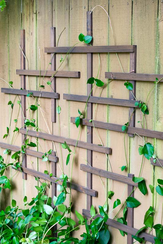 Weave your vines through the fence trellis to create a living wall!