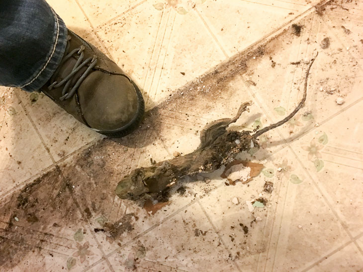 Dead Rat at foot