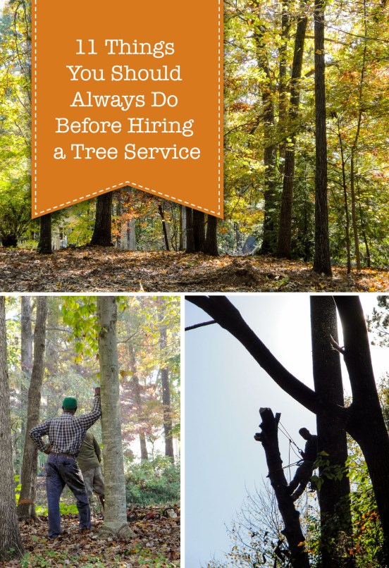 11 Things You Should Always Do Before Hiring a Tree Service