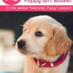 10 Things To Put In A Welcome To The Family New Dog Gift Basket Pretty Opinionated