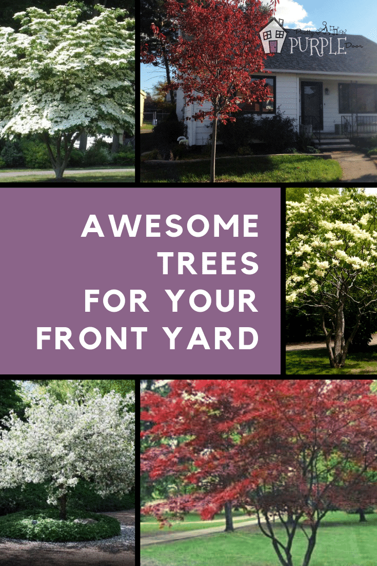 Choosing the perfect tree for your front yard