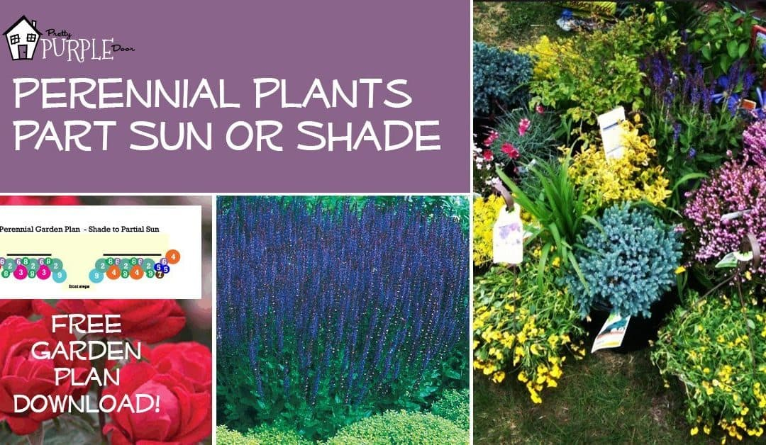 Perennial Garden Plans for Partial Sun or Shade – Perennial Shade Garden Plans