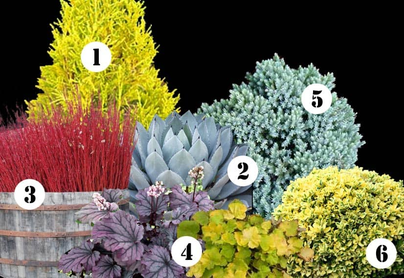 My front yard landscape plan this year & ideas for year-round color in your garden