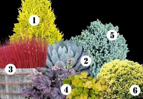 My front yard landscape plan this year ideas for yearround color in your garden
