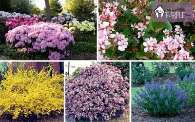 landscape layering with perennial shrubs