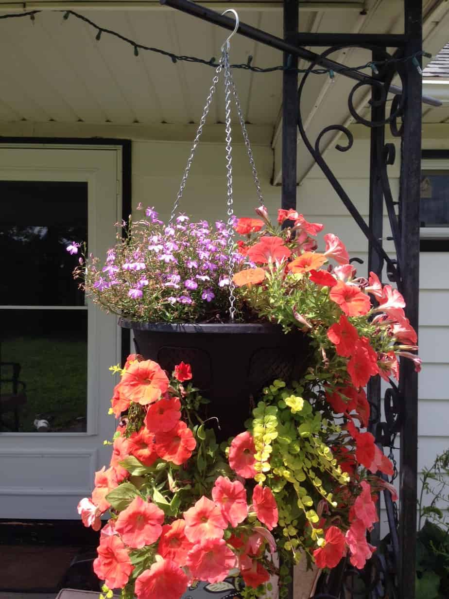 small garden ideas: diy self watering hanging basket