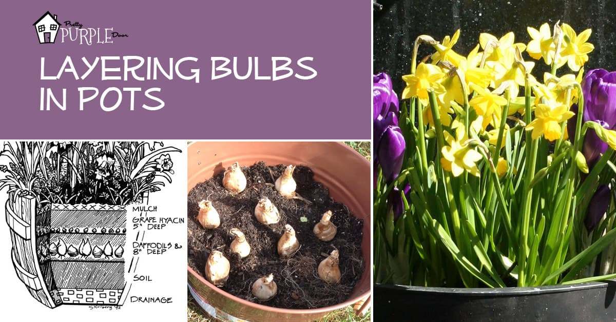 Layering Bulbs in Pots - How-To Instructions