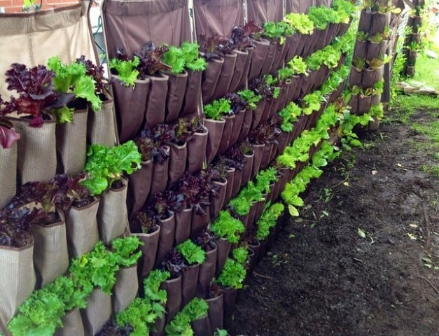 Small Garden Ideas: Plant a vertical garden with a canvas shoe holder