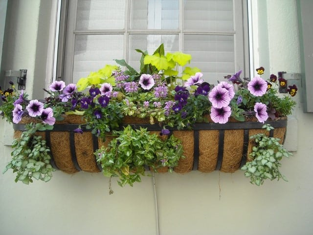 Small Garden Ideas: Plant in a window box