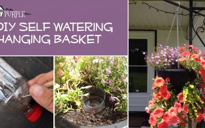DIY Self Watering Hanging Basket by PrettyPurpleDoor.com