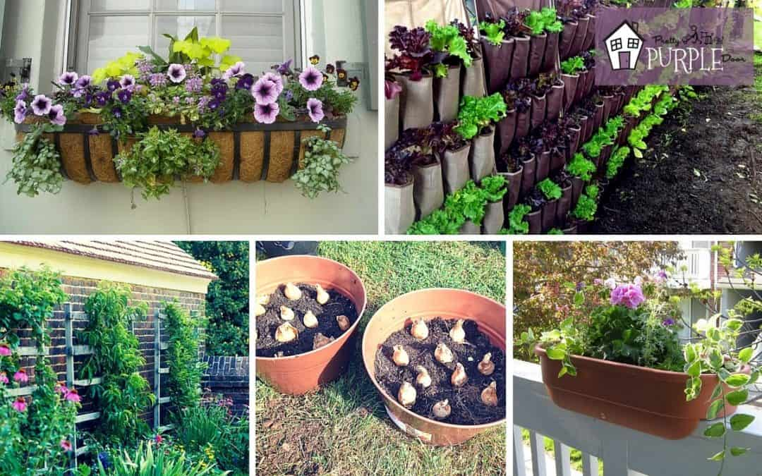 6 Awesome Small Garden Ideas To Try Today