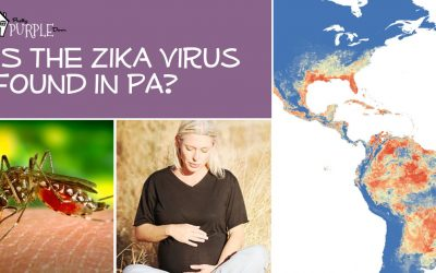 Zika virus page heading
