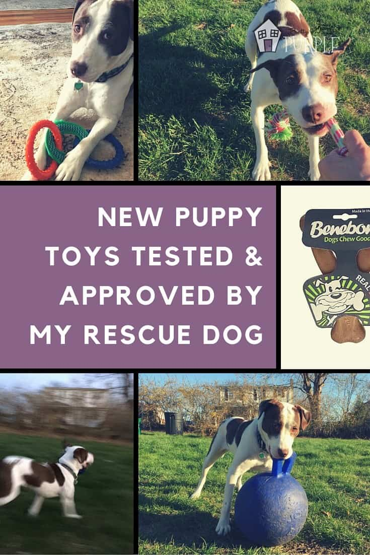 New puppy toys tested & approved by Sally