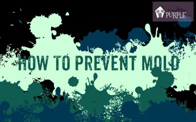How to Prevent Mold, by PrettyPurpleDoor.com