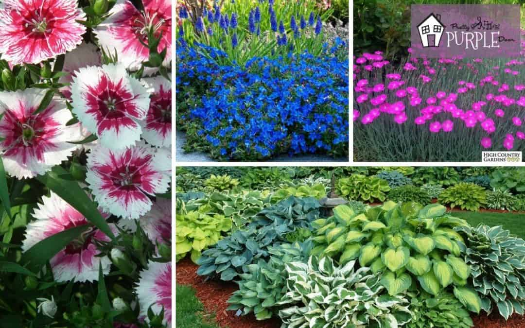 Perennial Garden Plan: Plants and Flowers Layer 4