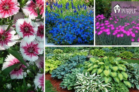 Incredible perennial plants and flowers for mixed borders