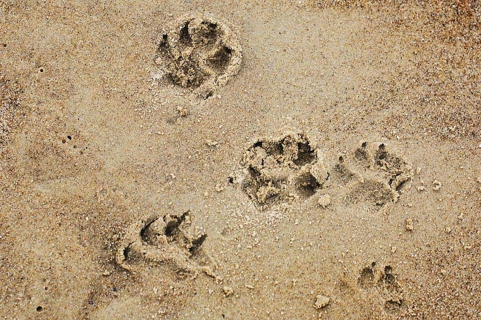 building a sandbox for your dog