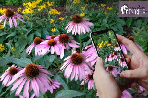 Plant identification apps – ID a plant on the go