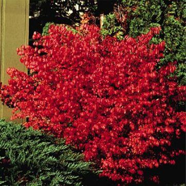 Perennial Garden Plan Deciduous Perennial Shrubs Layer 3
