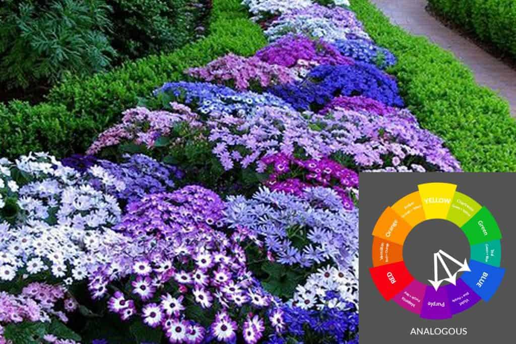 Analogous garden color scheme with blue, violet and purple
