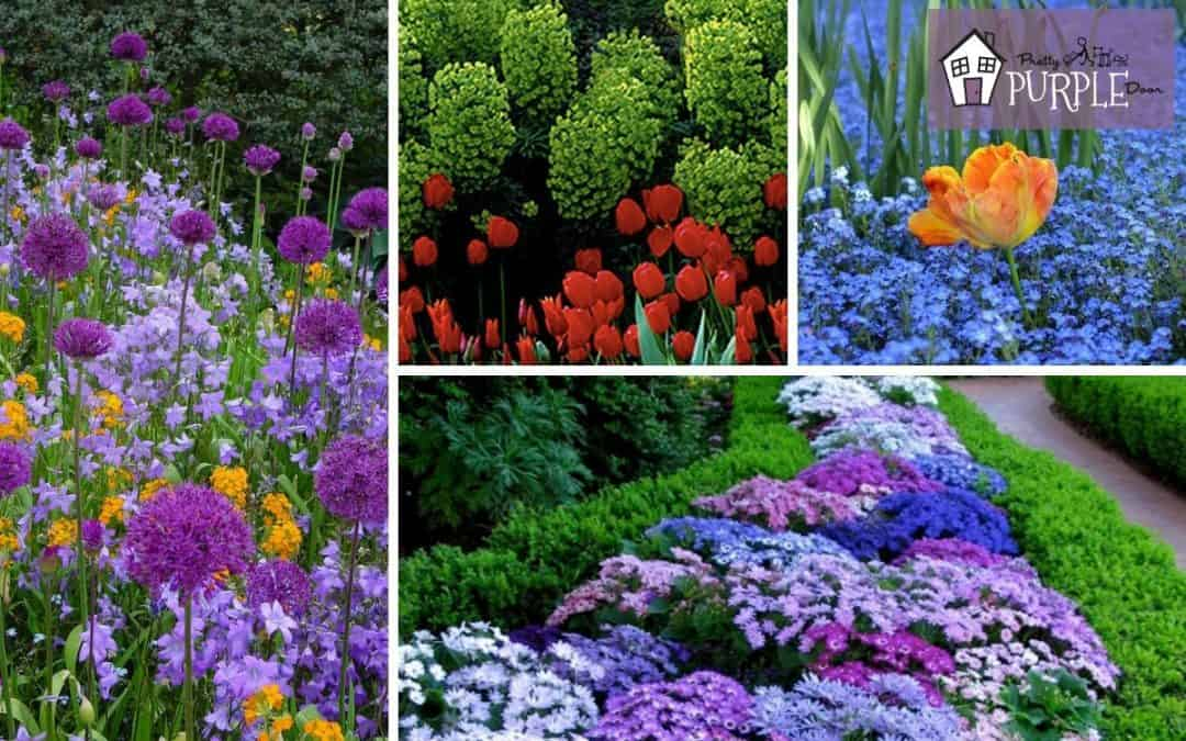 How to Create Gorgeous Garden Color Schemes