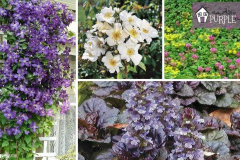 The best vines & groundcovers to complete your landscape