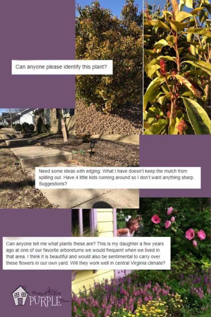 good landscaping questions for facebook groups