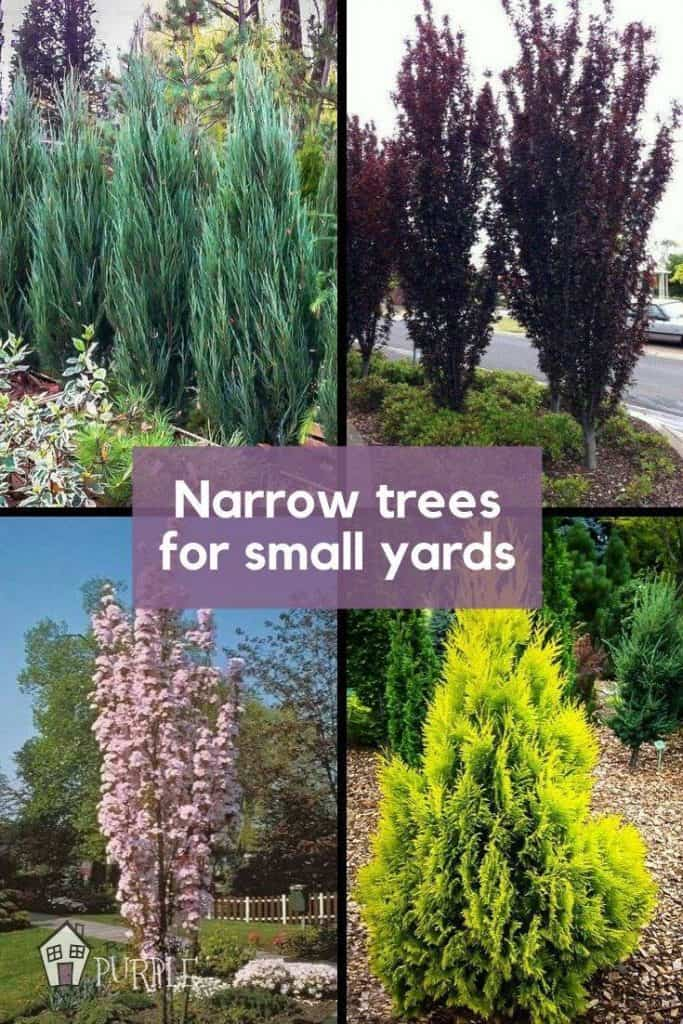 Narrow Trees For Small Yards That Pack A Punch Pretty Purple Door