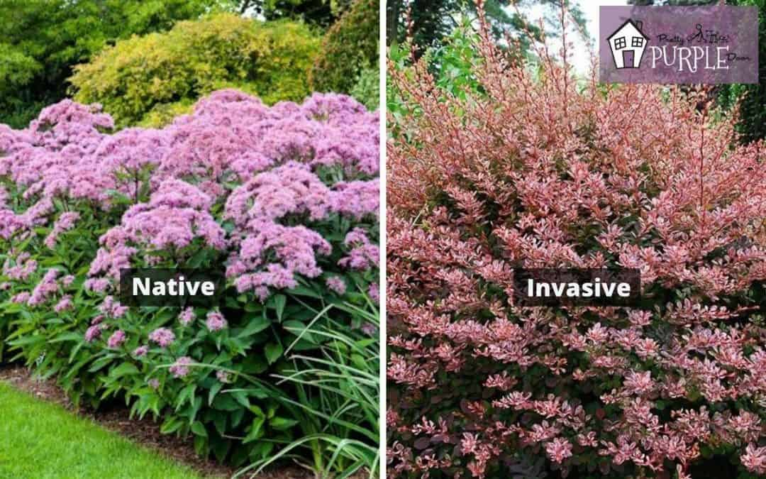 Native vs. Invasive Plants - What's the Difference