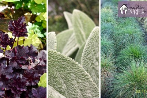 Plant Combinations: How to make unforgettable plant pairings