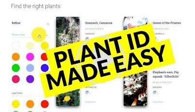 Plant Id Made Easy with These Apps