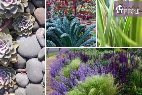 Plant Texture: for a garden you hafta touch
