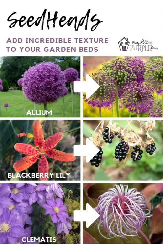 Seedheads add plant texture in your garden