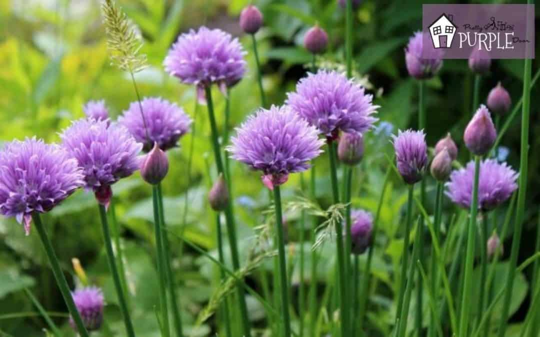 What to plant with purple flowers