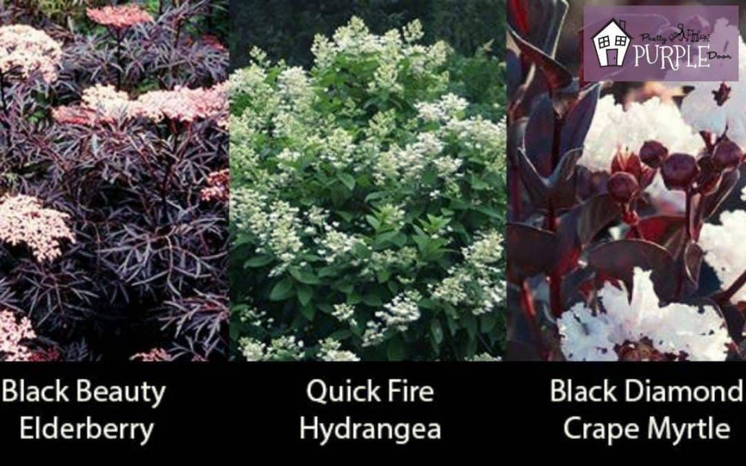 15 amazing plants with burgundy red leaves