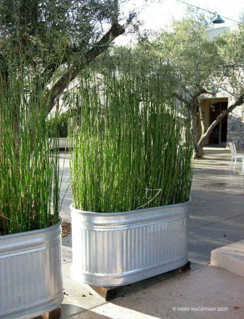 Use a large planter with tall grass to creative privacy from neighbor's deck
