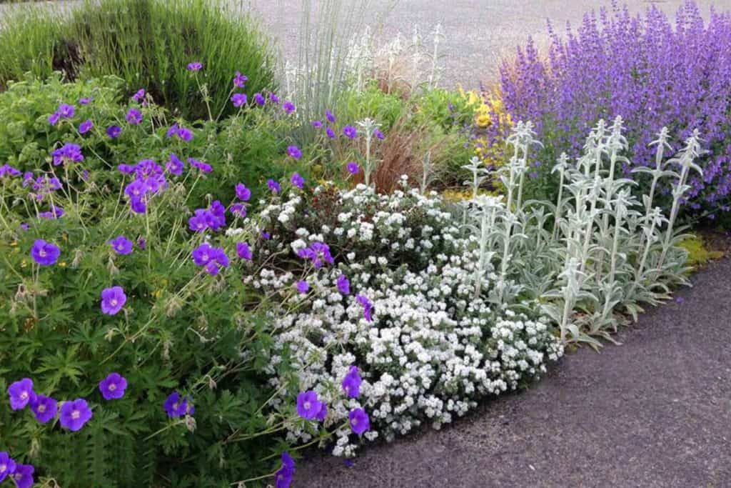 Purple and white flower garden