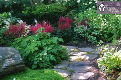Stunning plants for a shady landscape