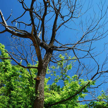 Debroussaillement arbres morts