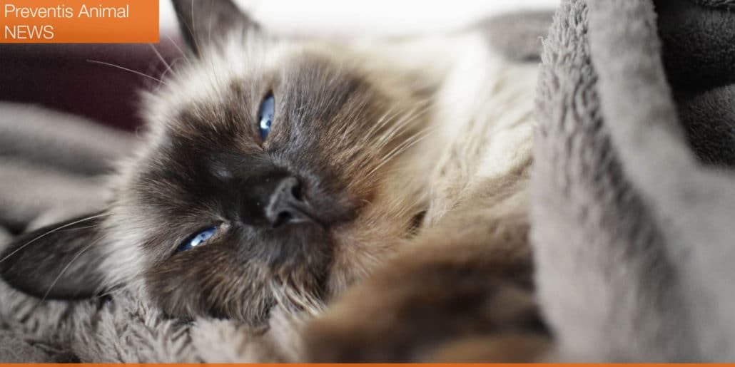 néphropathie et insuffisance rénale chez le chien et le chat