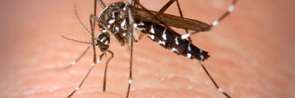 meteo zanzare
