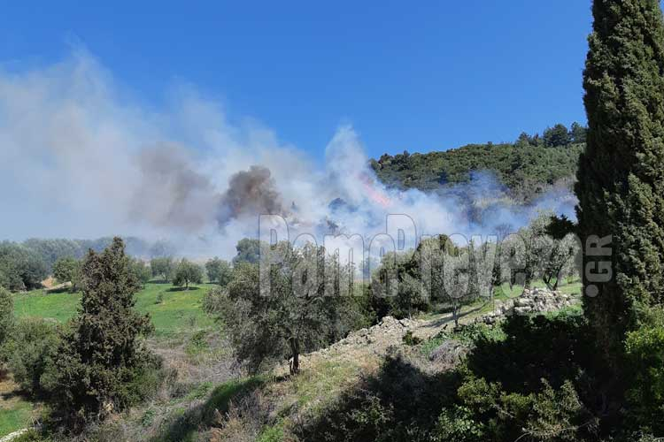 Πρέβεζα: Πυρκαγιά στα Ριζά – Καίγονται ελαιόδεντρα – Πλησιάζει στην Εθνική Οδό_5e06833d893bc.jpeg