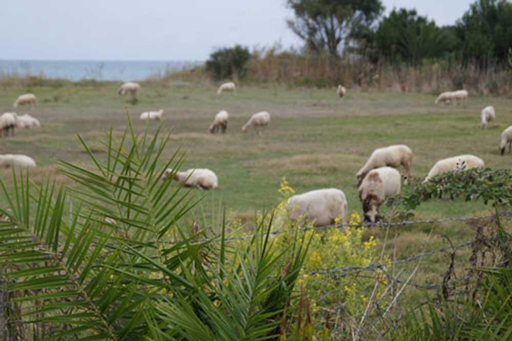 Πρέβεζα: Αποζημιώσεις σε κτηνοτρόφους στην Πρέβεζα