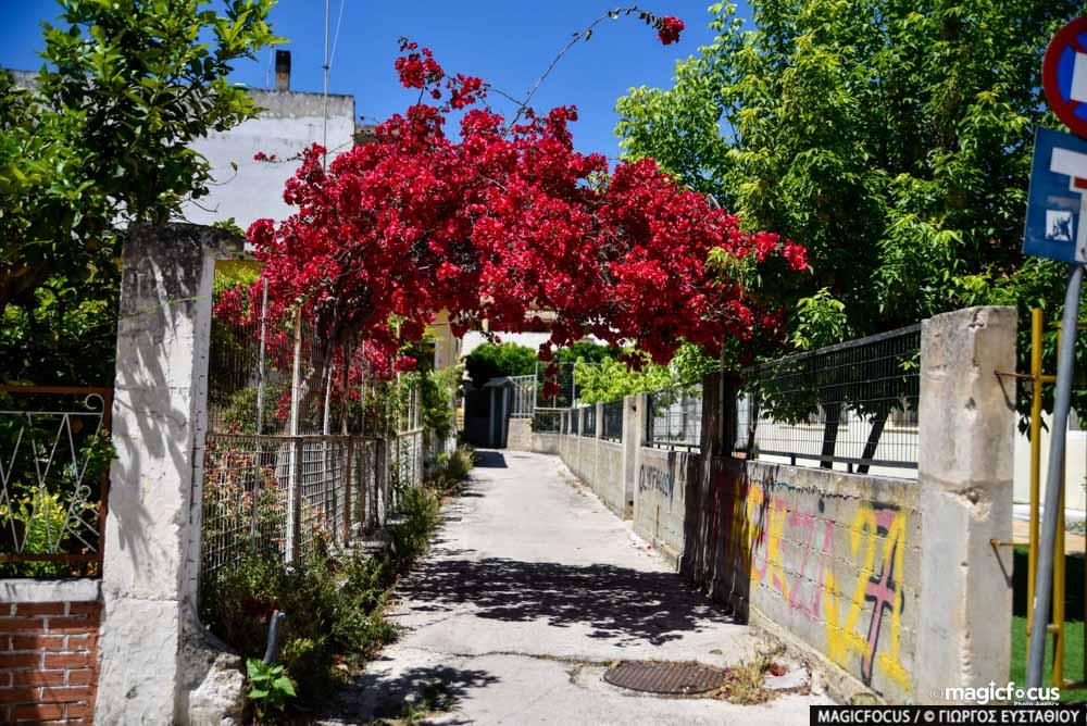 Πρέβεζα: Η Πρέβεζα αποκαλύπτεται – Η πόλη με τις βουκαμβίλιες σας καλωσορίζει – Φωτό