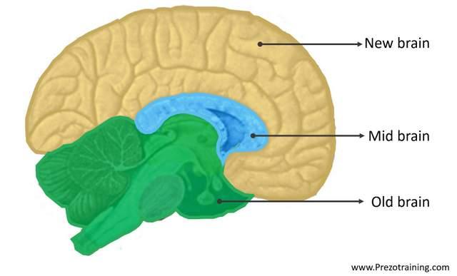 Understanding Human Brain